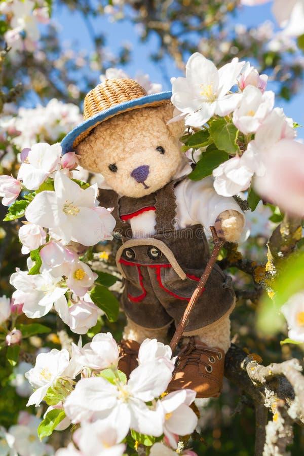 Goda dell'aumento alla stagione del fiore di Apple fotografia stock libera da diritti