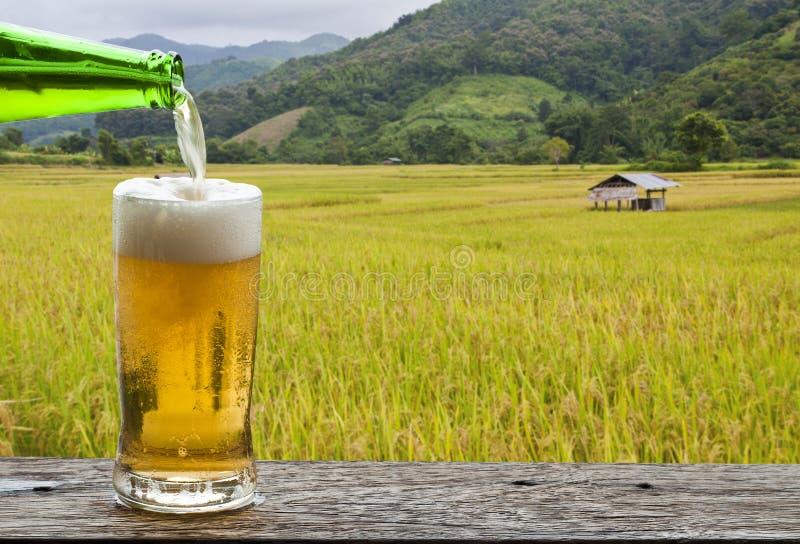 Goda della birra con il paesaggio del giacimento del riso fotografia stock libera da diritti