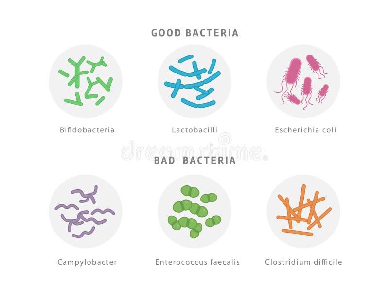 Goda och dålig bakterie- florasymbolsuppsättning som isoleras på vit bakgrund Medicinsk illustration för tarmkanaldysbiosisbegrep stock illustrationer