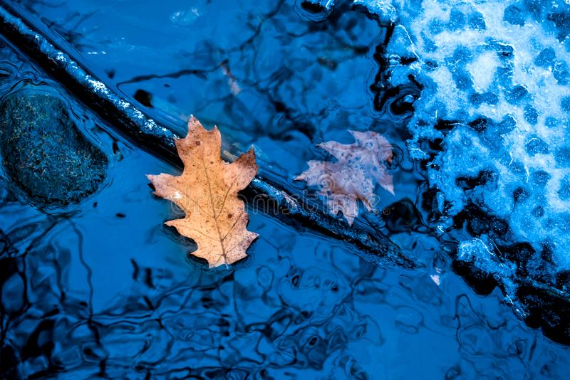 Goden Leaf Floating on Frozen Creek royalty free stock photography