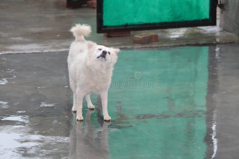 Godere della pioggia fotografia stock libera da diritti