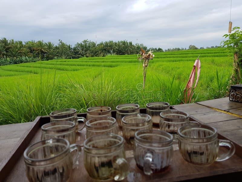 godere della varietà di caffè durante la visita ad un'azienda agricola del caffè in Bali, l'Indonesia fotografia stock libera da diritti