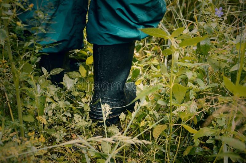 Godere della vista della foresta Camminando nella foresta fotografia stock libera da diritti