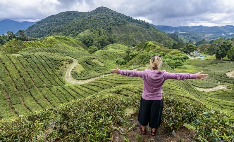Godere della vista sulla piantagione di tè fotografia stock libera da diritti