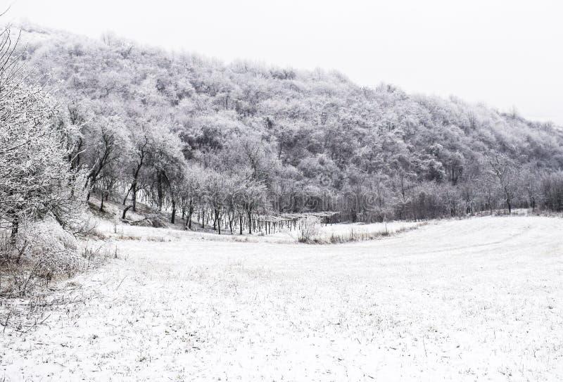 godziny krajobrazu sezonu zimę fotografia royalty free