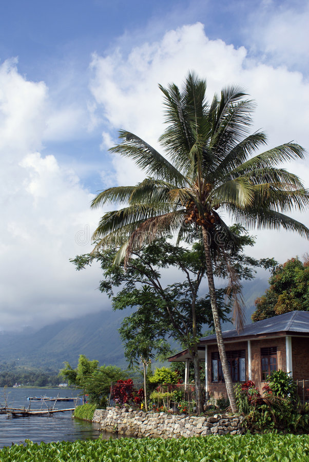 godziny palma fotografia stock