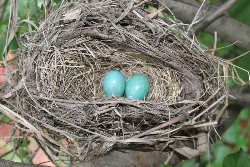 Goed Verborgen Robins-Nest stock afbeeldingen