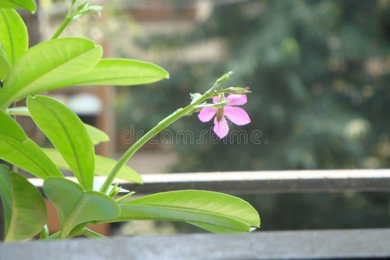 Goede bloemknop en flowrer royalty-vrije stock foto