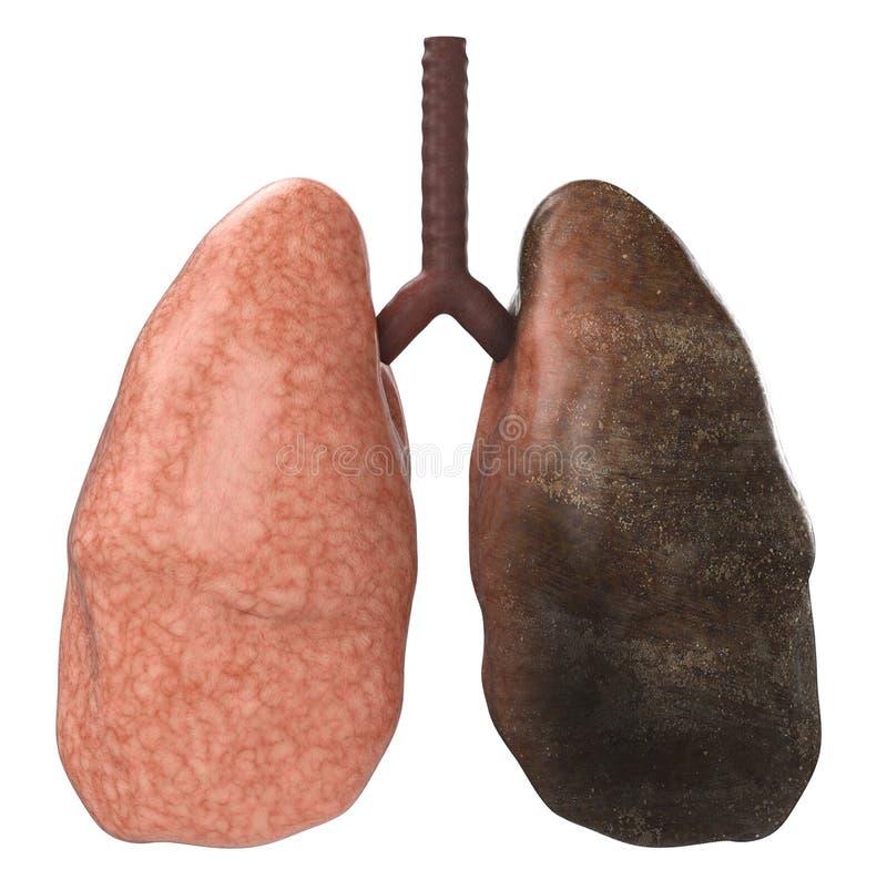 Goede en slechte longen stock illustratie