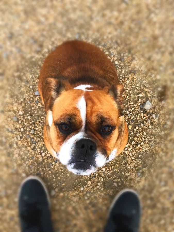 Goede Hond royalty-vrije stock afbeeldingen