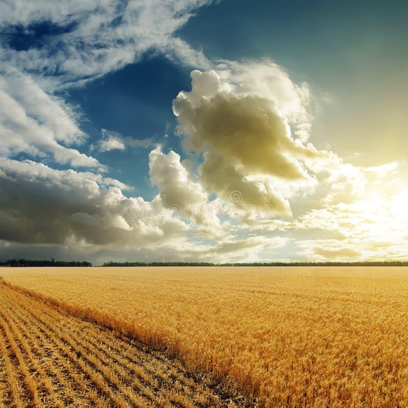 Goede zonsondergang over het oogsten van gebied royalty-vrije stock foto