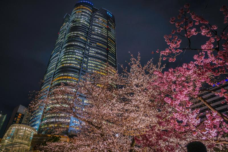 A going to see cherry blossoms at night and Roppongi Hills Mori garden royalty free stock photo