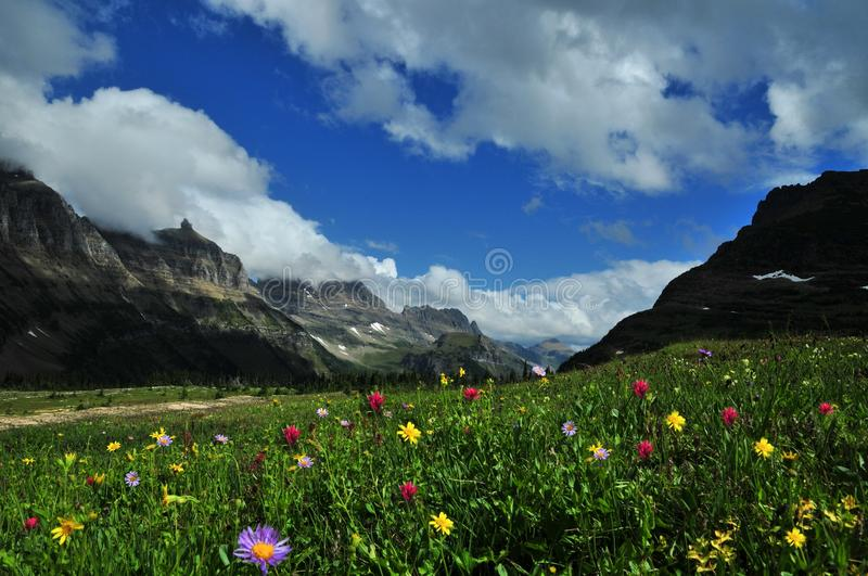 Logan Pass Panoramic nature landscape view of wild flowers and mountains stock photos