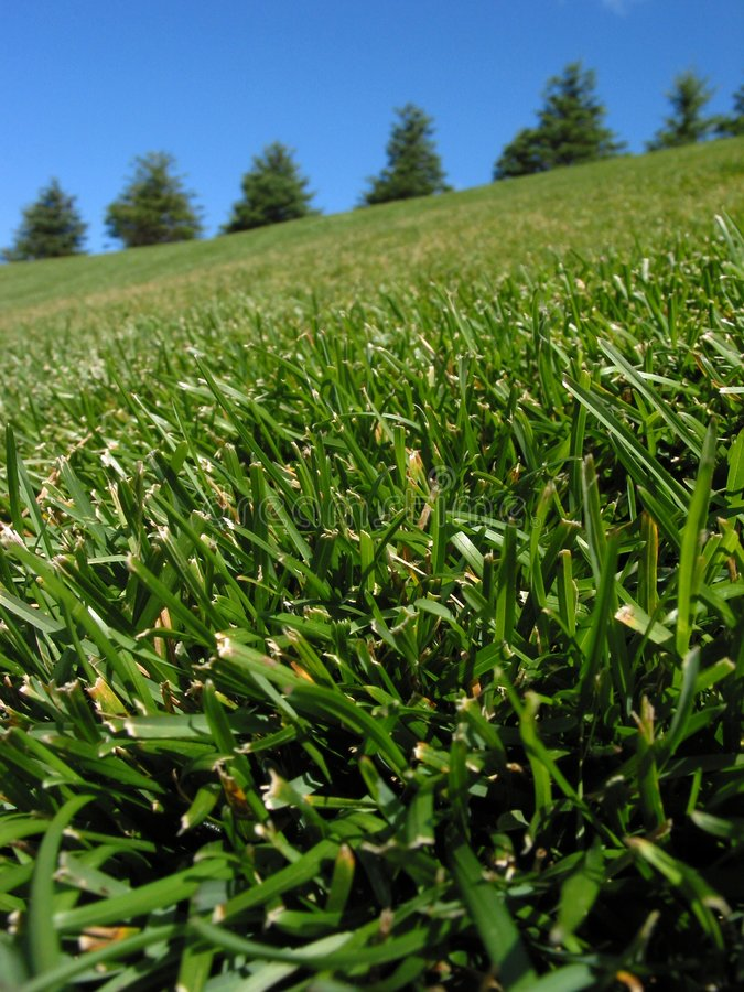 Download Going Up a Hill stock image. Image of garden, meijer, grass - 11047