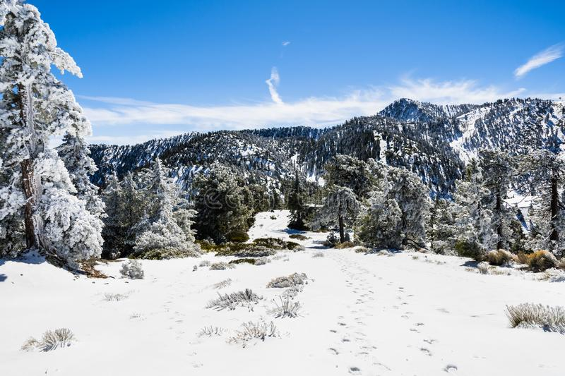 Going up on a ski slope on a sunny winter day, frozen snow covering the trees and the ground, Mount San Antonio (Mt Baldy), south royalty free stock photos