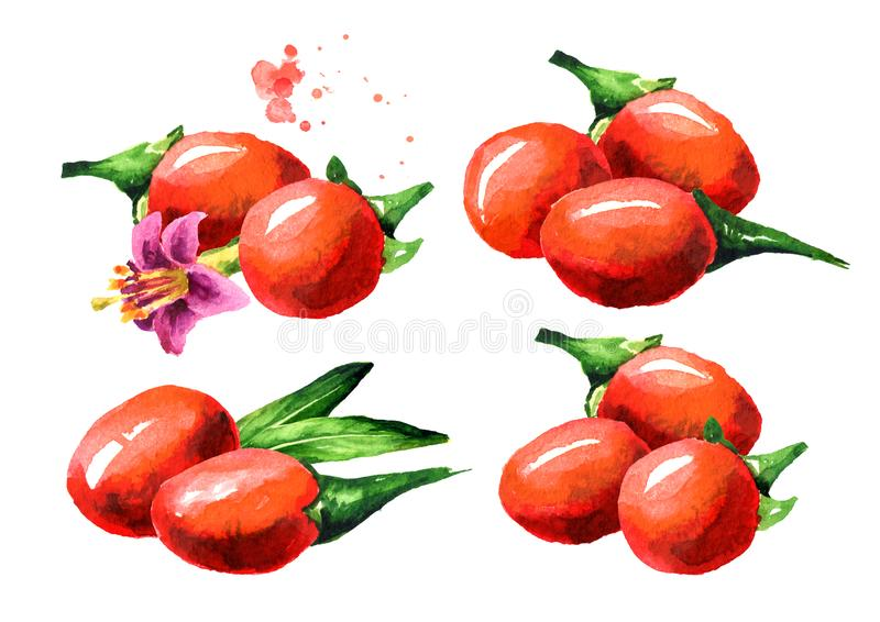 Goji莓果或枸杞barbarum集合 E 库存图片