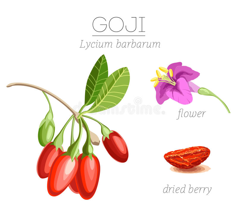 Goji莓果superfood 免版税库存图片