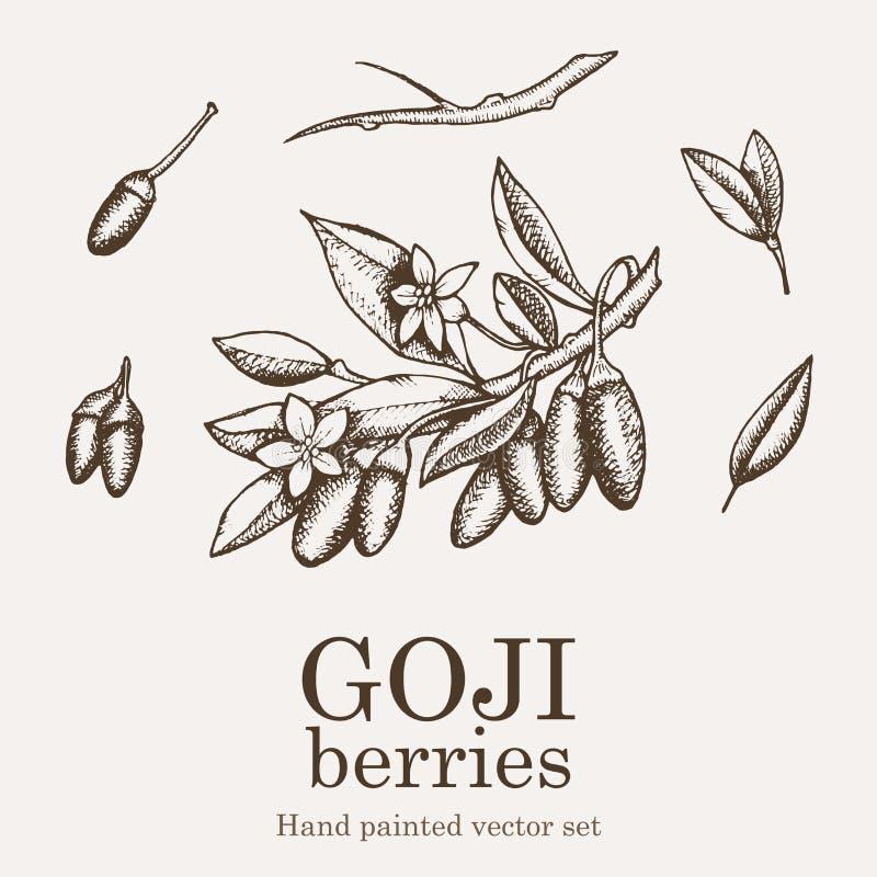 Goji superfood jagodowy set Zdrowie odżywki karmowej wektorowej ręki rysunkowa ilustracja ilustracji