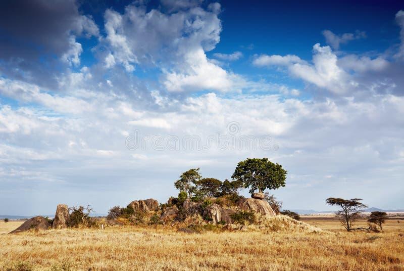 Gol-kopjes serengeti stockbilder