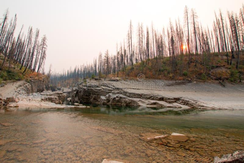 Gola dell'insenatura del prato su South Fork del fiume a testa piatta nell'area di Bob Marshall Wilderness nel Montana U.S.A. fotografia stock libera da diritti