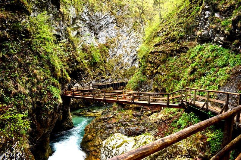 Gola di Vintgar in Slovenia fotografia stock libera da diritti