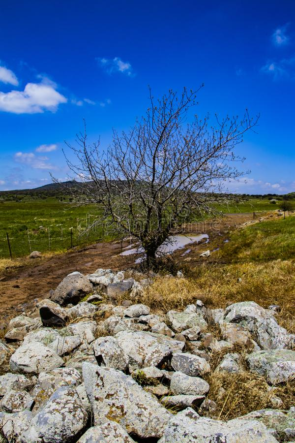 Golan Heights nature Trail - spring 2019. Views of the Golan Heights fron the Golan Trail, a pice of nature in northern israel royalty free stock photography