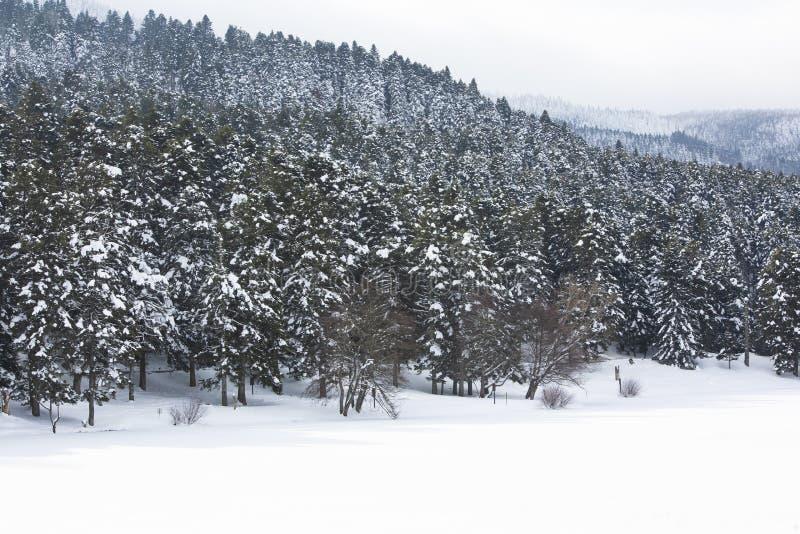 Golcuk / Bolu / Turkey, winter season snow landscape.  royalty free stock photo