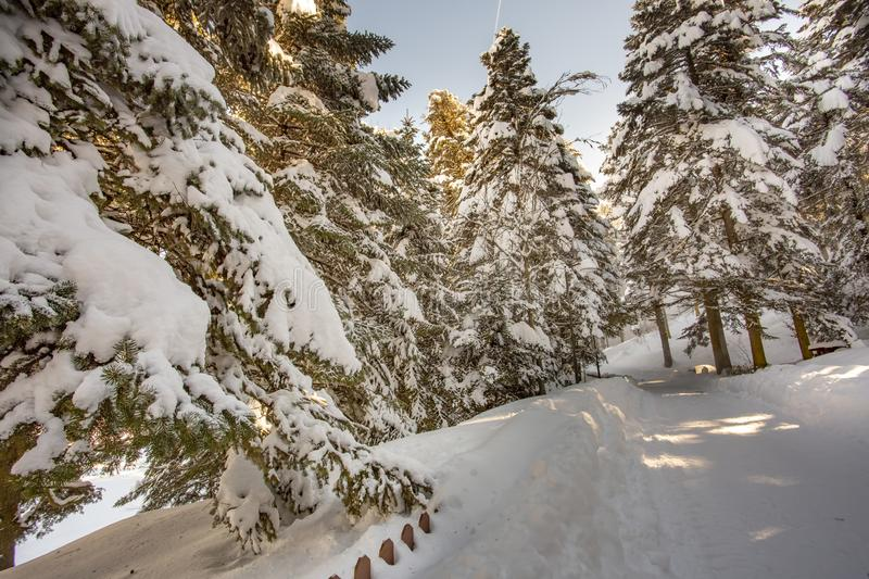 Golcuk / Bolu / Turkey, winter snow landscape. Travel concept photo stock image
