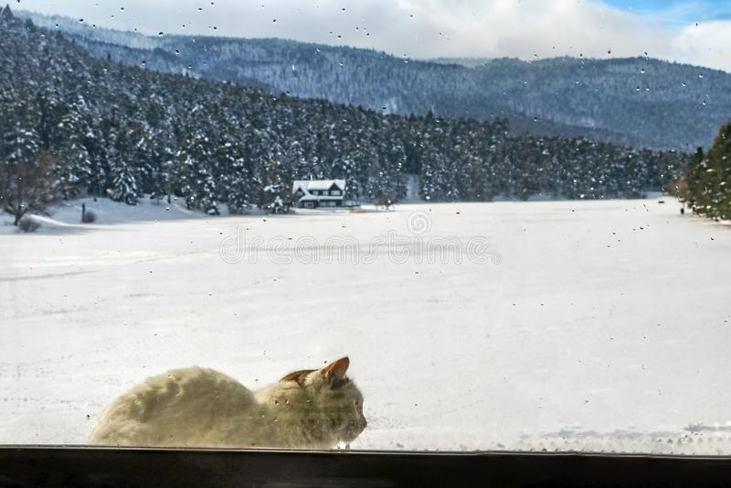 Golcuk / Bolu / Turkey, winter snow season landscape and cat.  stock photos
