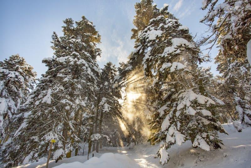 Golcuk / Bolu / Turkey, winter snow season nature landscape.  royalty free stock photography