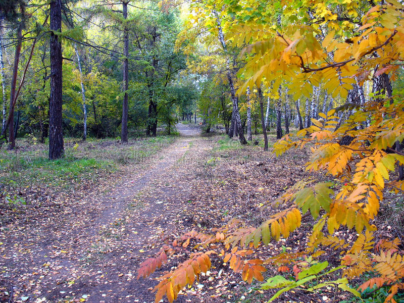 Gold autumn landscape - path in a mixed forest stock photography