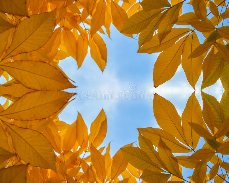 Gold autumn leafs. Beautiful autumn leafs reflected against a Blue stock image