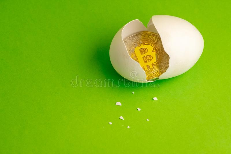 Gold Bitcoin coin in a broken egg. White eggshell with cryptocurrency symbol inside instead of yolk. Green background. Copy space. Gold Bitcoin coin in a broken stock images