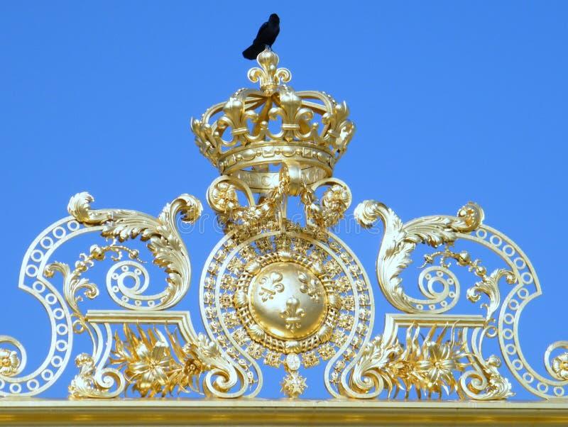 Black bird - king of the world royalty free stock image