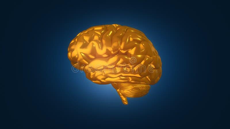 Gold brain on blue background, 3D illustration. Metallic gold brain model on dark blue background with gradient fade royalty free illustration