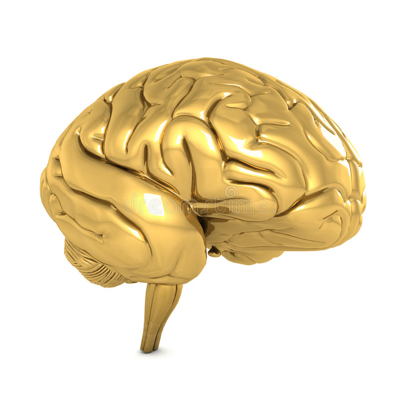 Gold brain isolated on white stock illustration