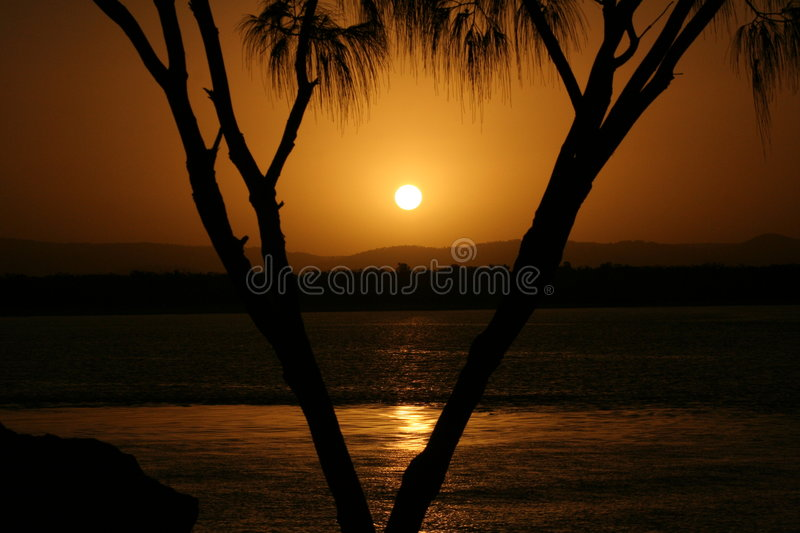 Gold Coast Sunset with palm tree stock photo
