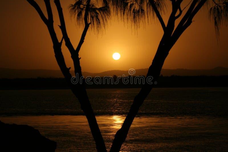 Gold- Coastsonnenuntergang mit Palme stockfoto