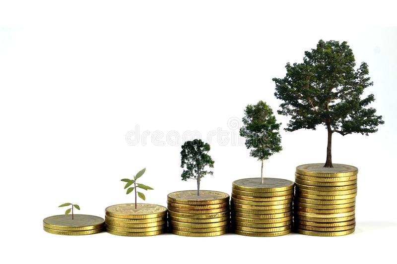Gold coins pile stack and growing money and grow trees that grow up on white background, Saving money and ecology concept stock photo