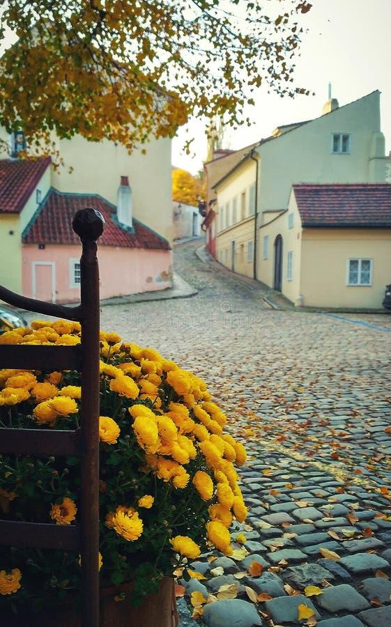 Gold des Herbstes stockbild