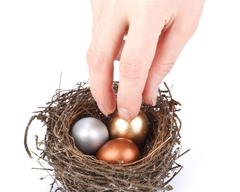 Download Gold egg stock image. Image of banking, bird, prosperity - 8313273