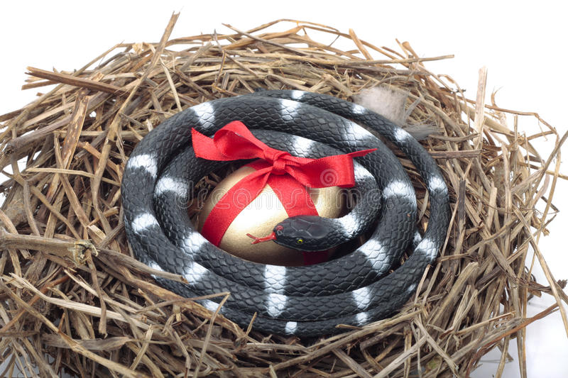 Gold egg in nest with snake protecting it. Gold egg in nest with snake protect steal concept royalty free stock image