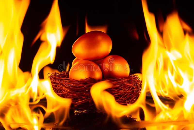 Gold eggs on nest surrounded by fire concept of investment risk stock images