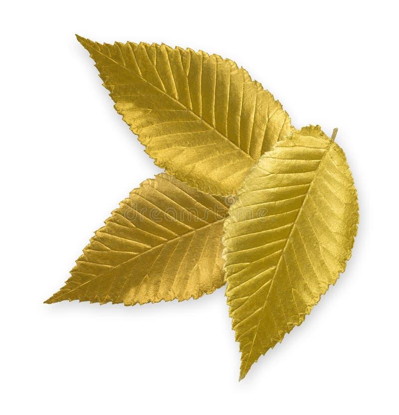 Gold Elm Leaf stock image