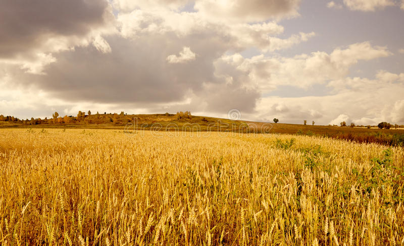 Gold Fields royalty free stock photography