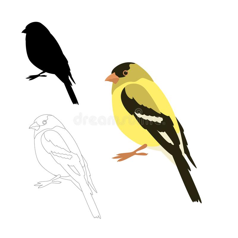 Free Gold Finch Bird Vector Illustration Flat Style Royalty Free Stock Images - 122316889
