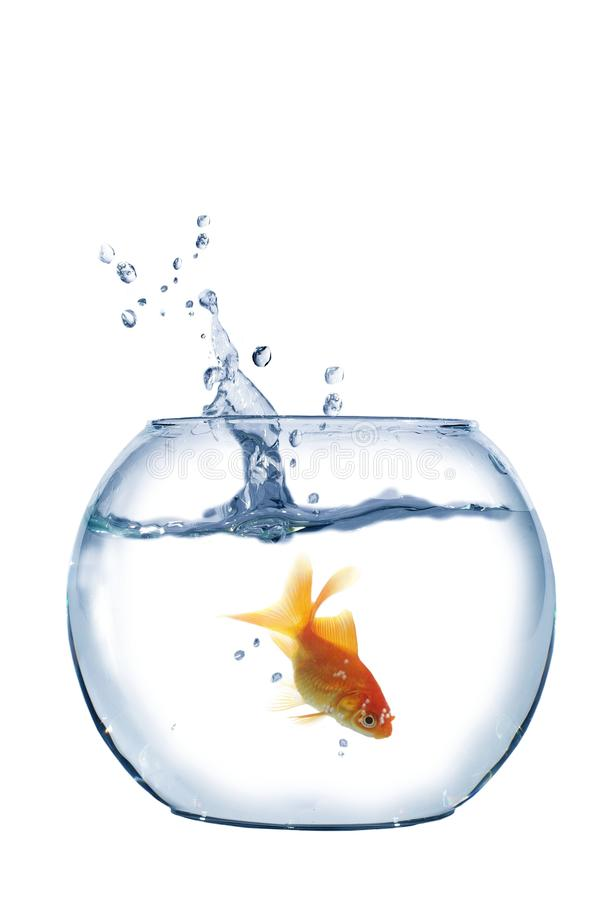 Download Gold fish stock image. Image of cute, motion, clean, floating - 14964591