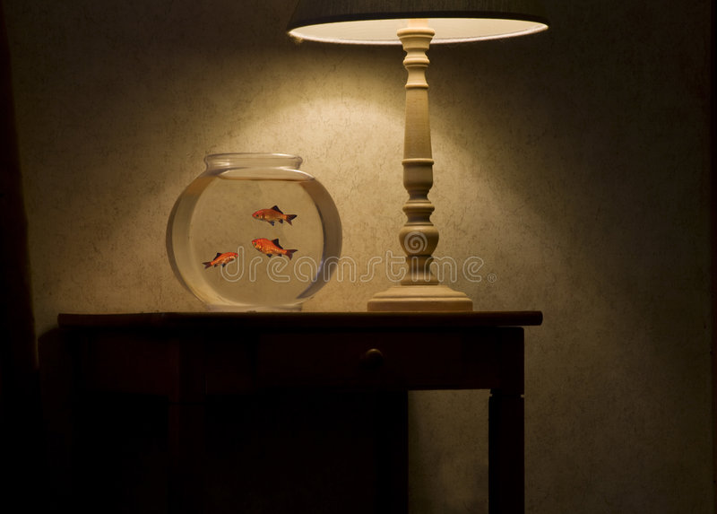 Gold fish bowel royalty free stock image