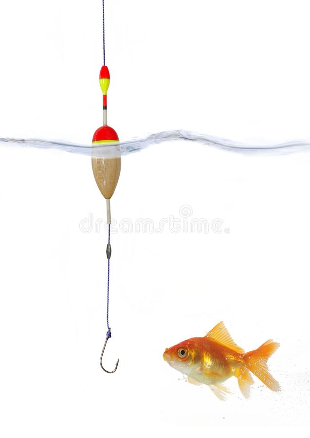 Gold fish and empty hook royalty free stock photography