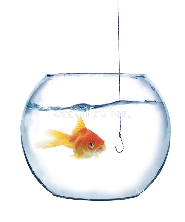 Gold fish and empty hook stock photos